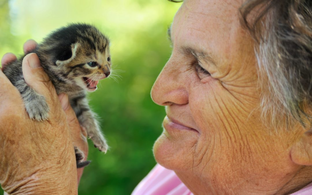 Reducing Loneliness in Seniors